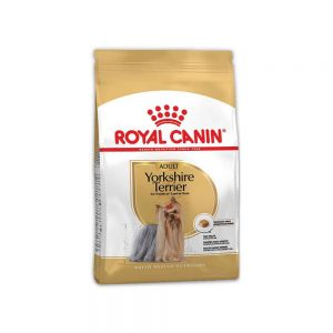 Yorkshire-Terrier-Adult-500-gm